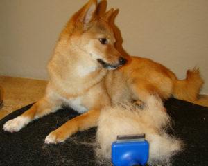 clean dog hair