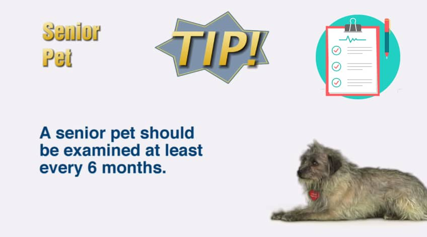 Take Your Pet Regularly to The Vet