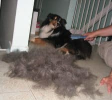 remove pet hair