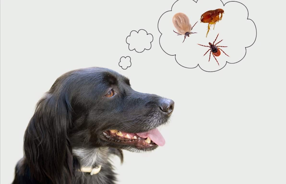 Make sure your dog is protected from ticks and mosquitoes