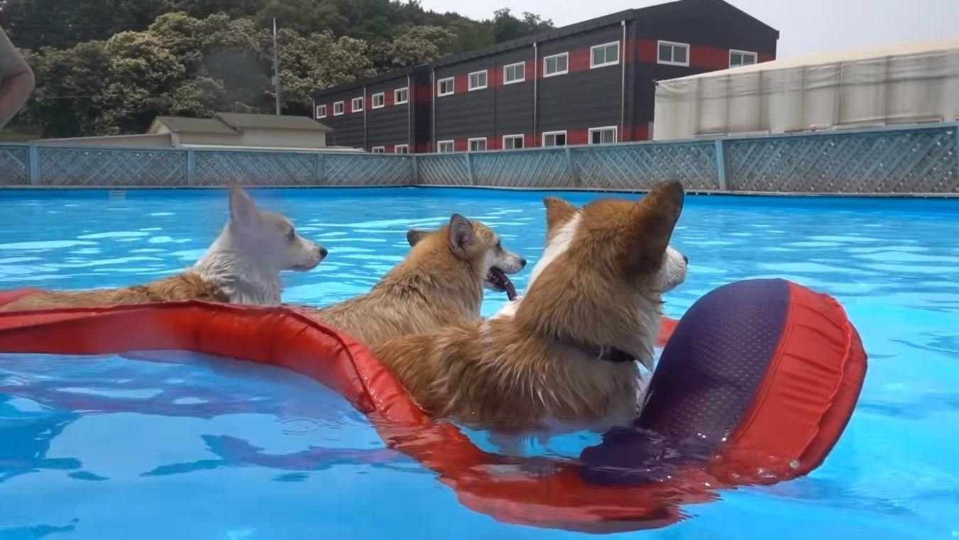 Be around your dog when he swims