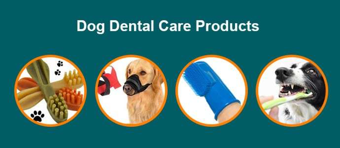 dog dental care products