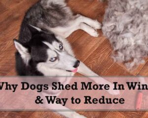 Why Dogs Shed More In Winter