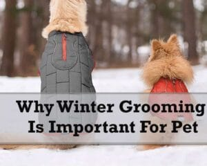 Why Winter Grooming Is Important For Pet