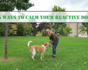 Ways To Calm Your Reactive Dog